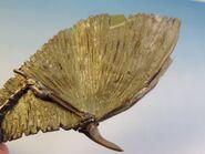 Dragon wings 10