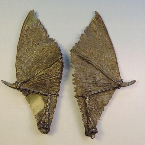 File:Dragon wings 1.jpg