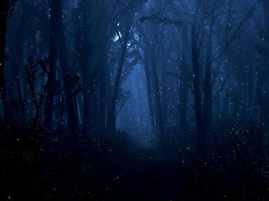Frostleaf Forest