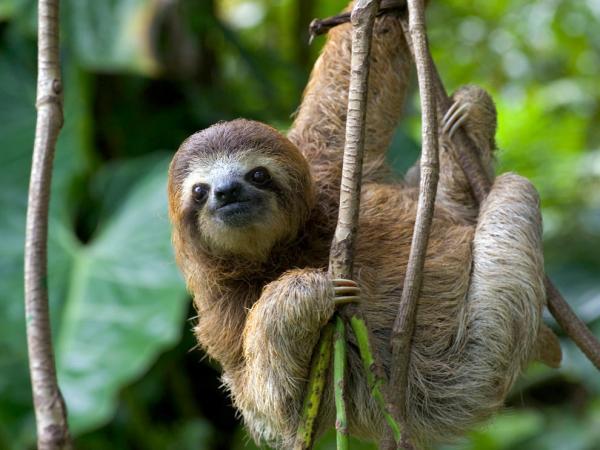 animales que puedes ver en Colombia