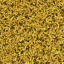 Grasssavanna
