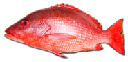 Red Bright Fish