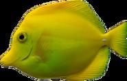 Yellow Bright Fish