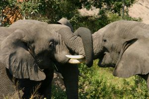 712759 elefants 3