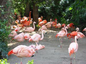 969777 flamingo 2