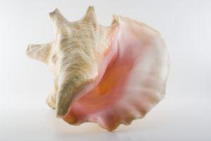 791602 shell 3
