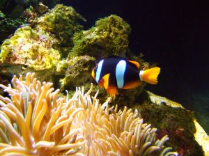 File:289368 saltwater fish 1.jpg
