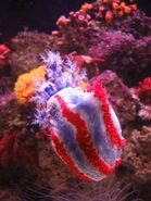 272256 patriotic sea creature