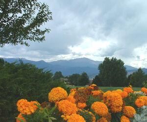 Marigold+Flowers-6546
