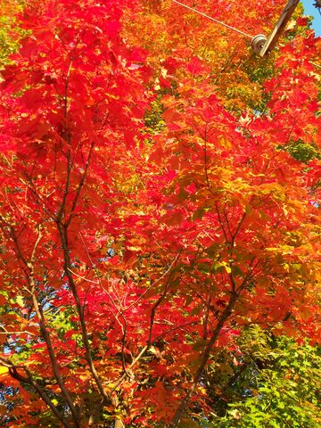 File:Autumn.jpg