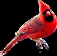Red Carainal Bird