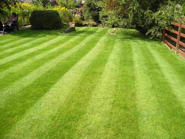 File:Lawn 1.jpg