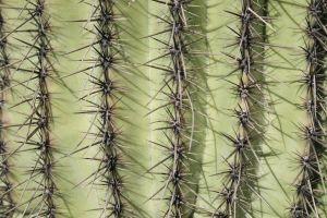 File:981504 cactus.jpg