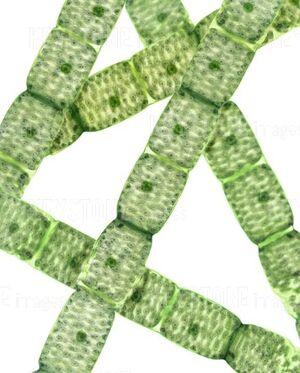 Algae spire