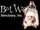 Bat World