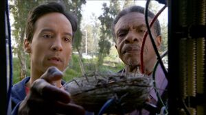 6x4 Abed and Ekroy move the nest