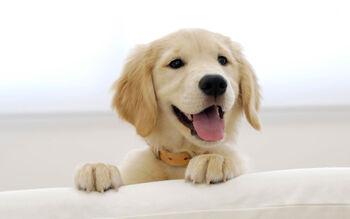 Papel-de-parede-cachorro