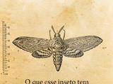 """Bleubird/Como relatar """"bugs"""" para a Wikia"""