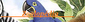 Mundo Animal Wiki - logo