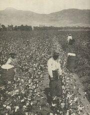Cotton Slaves-South
