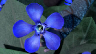 Oleander Azul