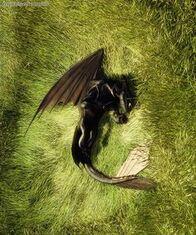 Dragon nip