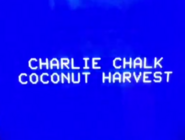 Charlie Chalk Coconut Harvest
