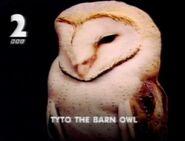 BBC2 Tyto the Barn Owl