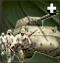 CommandAbility Off-Map Combat Group