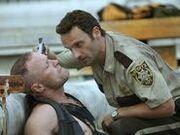 Merle 3