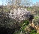Flora de la Comarca de Alcalá
