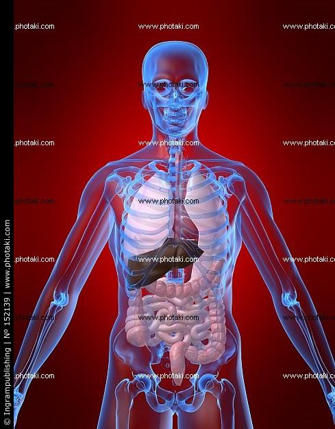 Imagen - Anatomia-humana-pecho-anatomica 152139.jpg | Wiki ...