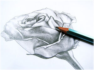 How-to-draw-a-rose-picture