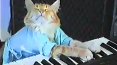 Charlie Schmidt's Keyboard Cat! - THE ORIGINAL!