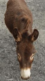 JPEG example donkey 100