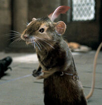 Mouse narnia