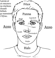 Parts of the head in nuirn