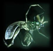 Mantis vignette
