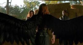 Fallen Wings