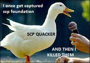 Duck-quack