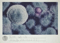 Ref 66IIB Mold Variation