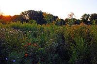 Hortus Botanicus Rocallae