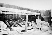 Picture of Manchurian Plague victims in 1910 -1911