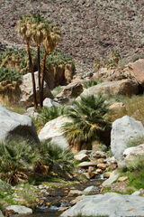 Borrego Palms Canyon Oasis