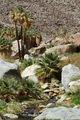 Borrego Palms Canyon Oasis.jpg