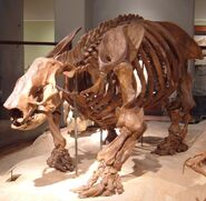 Ground sloth fossil