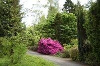 Eidith NicLeagh Arboretum