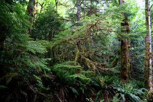 Rainforest on Rockall