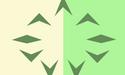Ninelandsflag