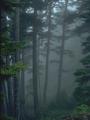 Conifer Forest Derhaland.png